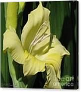 Gladiolus Named Nova Lux Canvas Print