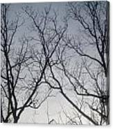 God Made Trees Canvas Print