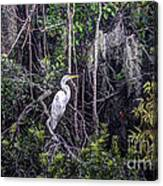 Heron Colors Canvas Print