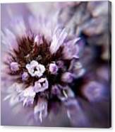 Spring Is Bursting Out All Over. Canvas Print