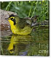 Kentucky Warbler Canvas Print