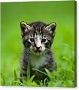 Kitty In Grass Canvas Print