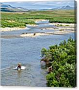 4-lay Of The Land Many Grizzly Bears In Moraine River In Katmai National Canvas Print