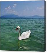 Mute Swan. Sirmione. Lago Di Garda Canvas Print