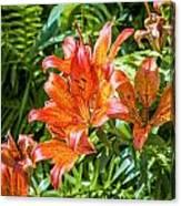 Orange Lilium Canvas Print