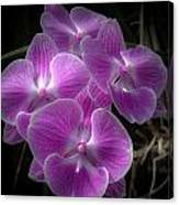 Orchid Dream Canvas Print