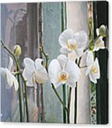 4 Orchidee Canvas Print
