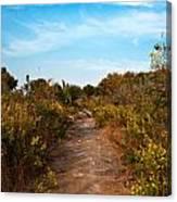 Pathway Through Colorful Fall Autumn Foliage Canvas Print