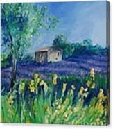 Provence Lavender Field Canvas Print