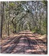 Road To Angel Oak Canvas Print