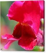 Snapdragon Named Red Chimes Canvas Print
