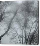 Storm Trees Canvas Print