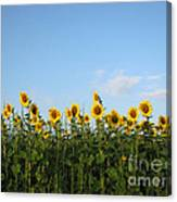Sunflower Series Canvas Print