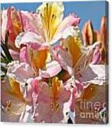 Sunny Petals Canvas Print