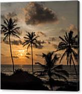 Sunset And Palm Tree Canvas Print