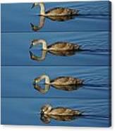 4 Swan Canvas Print