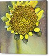 The Sunflower Canvas Print