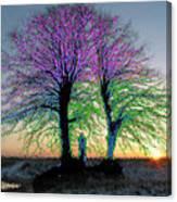 Trees Aglow Canvas Print