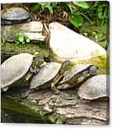4 Turtles On A Log Canvas Print