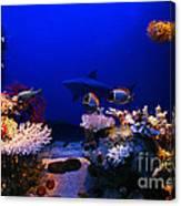 Underwater Scene Canvas Print