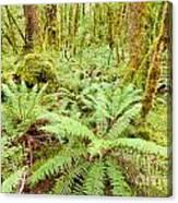 Virgin Rainforest Wilderness Of Fiordland Np Nz Canvas Print