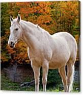 White Horse In Autumn Canvas Print