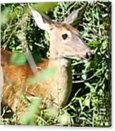 White Tailed Deer Portrait Canvas Print