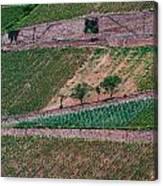 Wine Of Rhine Canvas Print