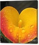 Zantedeschia Named Flame Canvas Print