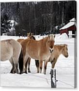 40104-5 Norwegian Horses Canvas Print