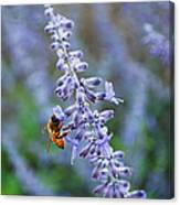 #russiansage Canvas Print