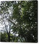 Camera Peak Thru Nature Buy Faa Print Products Or Down Load For Self Printing Navin Joshi Rights Man Canvas Print