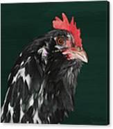 47. Bearded Hen Canvas Print