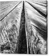 5-4-3 Canvas Print