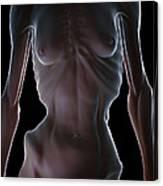 Anorexia Canvas Print