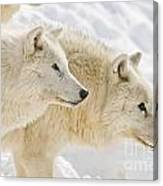 Arctic Wolves Canvas Print