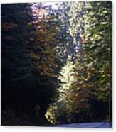 Autumn 4 Canvas Print