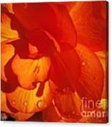 Begonia Named Nonstop Apricot Canvas Print