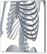 Bones Of The Torso Canvas Print