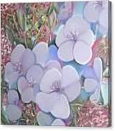 Bottlebrush In Contrast Canvas Print