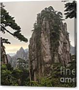 Chinese White Pine On Mt. Huangshan Canvas Print