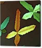 Copper Sulphate Canvas Print