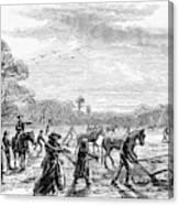 Cotton Plantation, 1867 Canvas Print