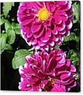 Dahlia Named Edinburgh Canvas Print