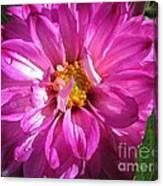 Dahlia Named Pink Bells Canvas Print