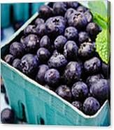 Fresh Picked Organic Blueberries Canvas Print