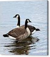 Geese Canvas Print