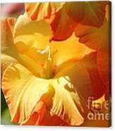 Gladiolus Named Halloween Canvas Print