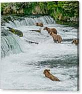 5 Grizzlies Canvas Print