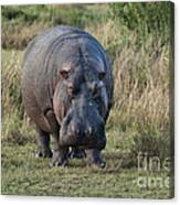 Hippopotamus Canvas Print